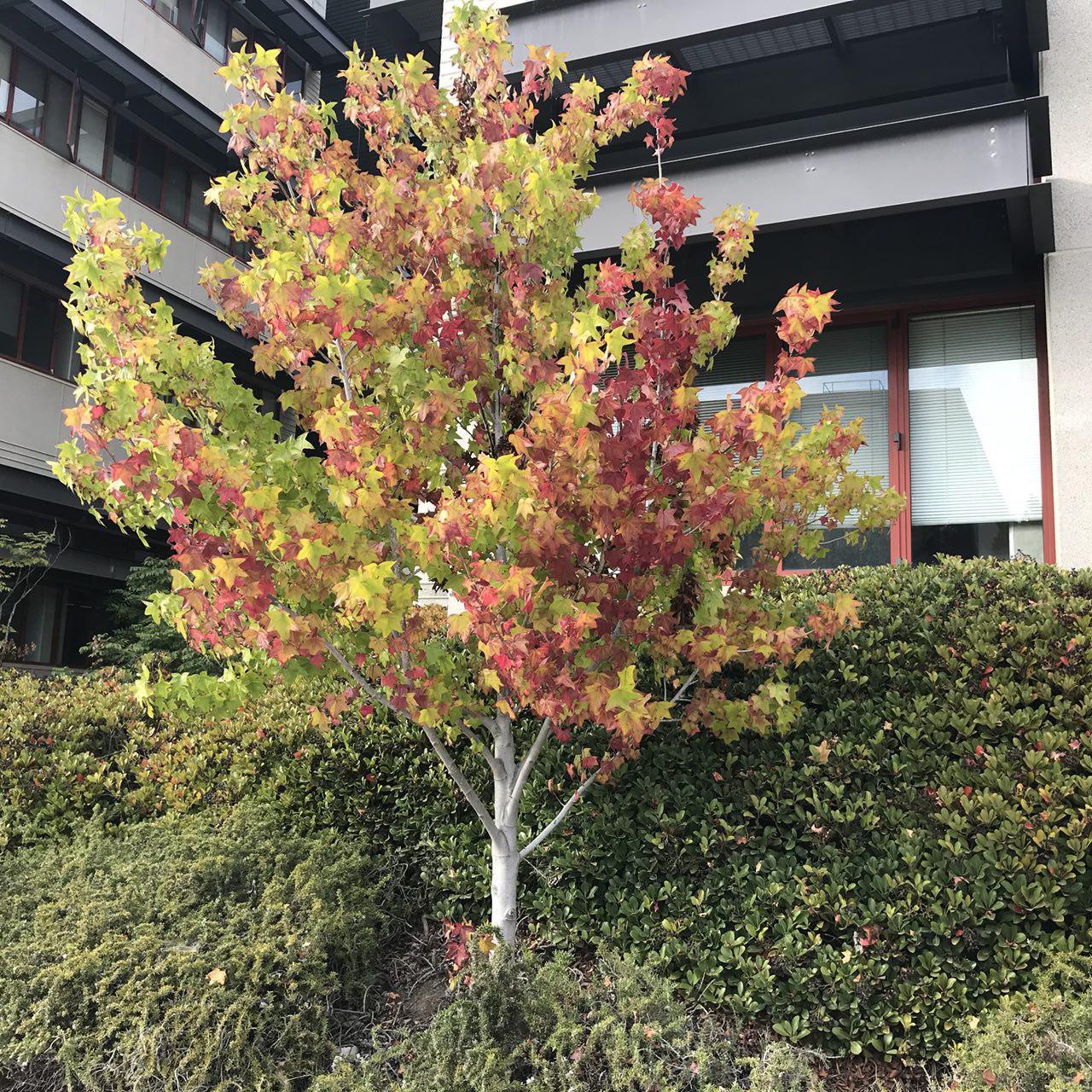 [تصویر:  462500_o93p_autumn.jpg]